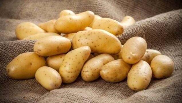 Patates Hangi Ayda Ekilir?
